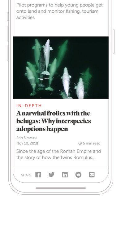 Narwhal Article Mobile